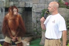 Brian Gisi performing public show with orangutan